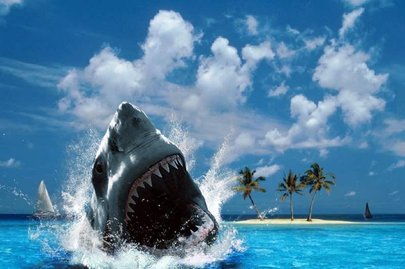 PAR atmeta dokumentinio filmo kūrimo sąsajas su ryklio užpuolimu