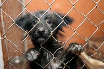 Nesutiko mažinti mokestį už gyvūnus