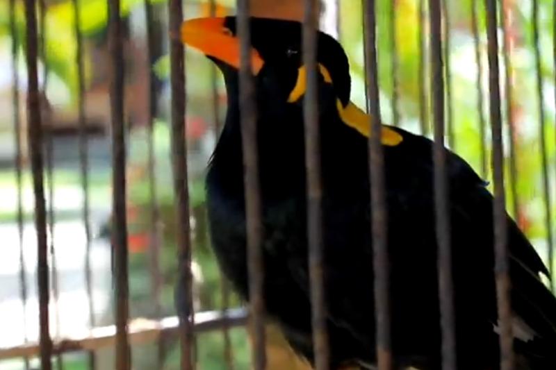"""Paukštis dėl itin """"riebių"""" keiksmų uždarytas į vienutę"""
