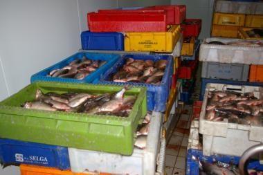 Pajūryje išaiškinta šešėlinė prekyba žuvimi
