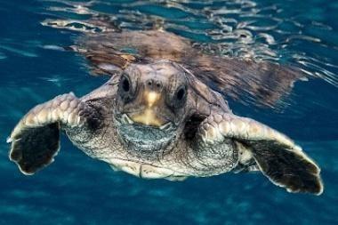3D kelionėje – Pasaulio vandenyno paslaptys ir gyventojai