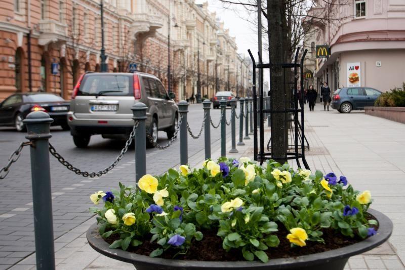 Gėlės sostinėje išnyko, bet ne dėl ilgapirščių kaltės