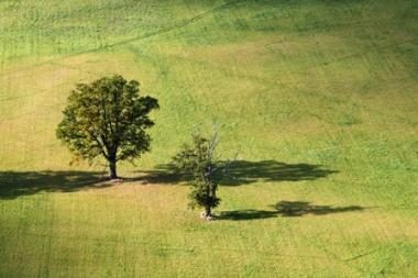 Sukčiai pardavinėjo svetimą žemę Vilniuje