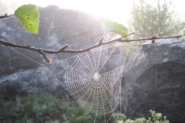Puošniais voratinkliais vorai pritraukia daugiau vabzdžių