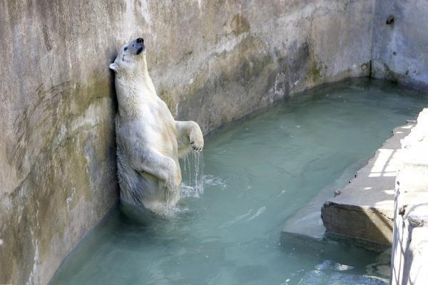 Zoologijos sodo lankytojai regi tuščius voljerus