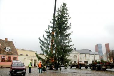 Klaipėdoje jau pastatyta Kalėdinė eglė