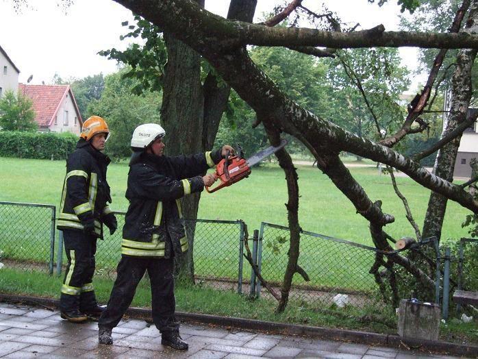 Klaipėdos gyventojai gali nuverstus medžius pasiimti kurui