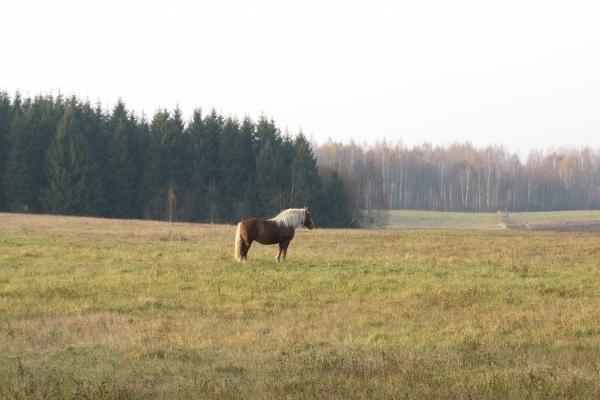 Alytaus rajone iš ganyklos pavogti du arkliai