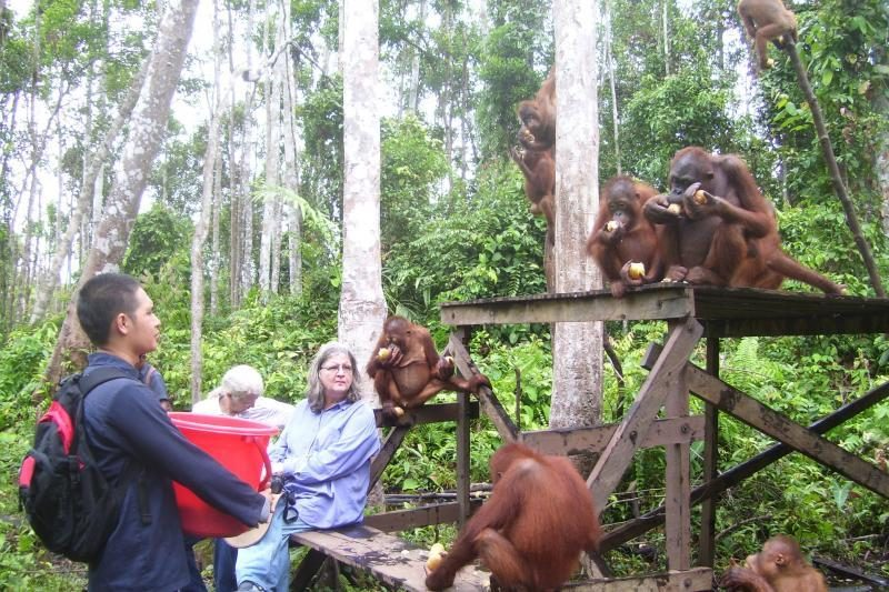 Unikali kryptis turistams – į Borneo džiungles pas B.Galdikas