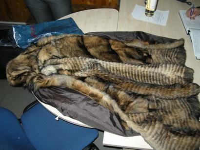 Kovotoja už gyvūnų teises norėjo pasamdyti žudiką kailinių nešiotojui