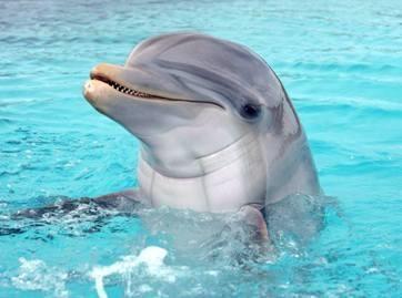 Žalieji kaltina jūrų muziejų delfinų išnaudojimu