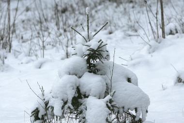 Sinoptikai: kritulių kiekis Klaipėdoje - prie kritinės ribos