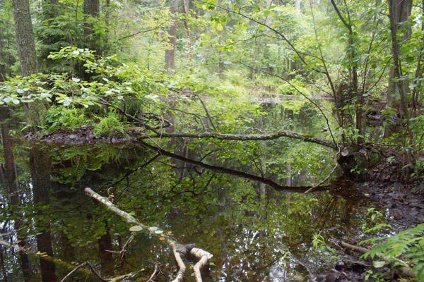 Dėl dažno lietaus gaisrų pavojus miške - sąlyginai nedidelis
