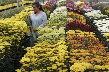 Kaune floristus mokys pasaulinio garso dizaineris