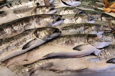 Žvejai lašišų parduotuvėje neieško