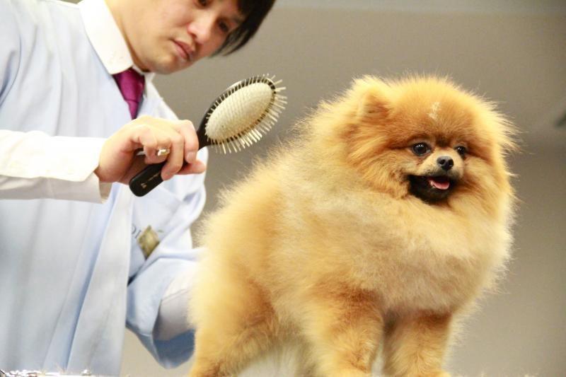 Nutukusiems šunims įveikti laiptus padės keltuvas
