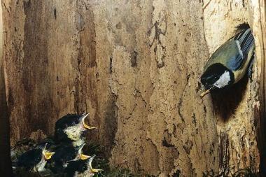 Atėjo laikas įrengti paukščių lesyklas