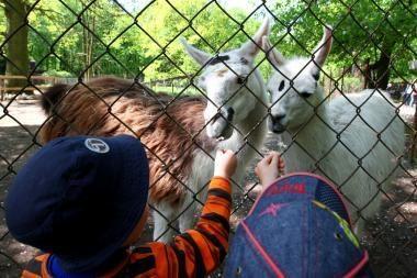 Kaip Zoologijos sodą padaryti patrauklesnį?