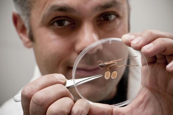 Mokslininkai rado didžiausių lytinių organų rekordininką