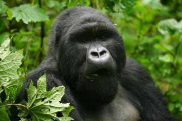 Afrika Kauno zoologijos sode
