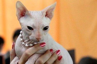 Tarptautinėje parodoje – 200 kačių ir retos veislės