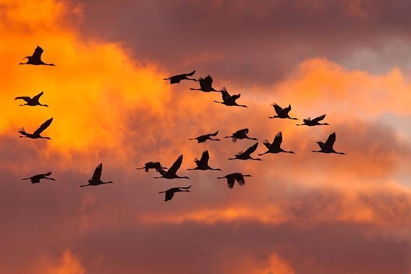 Paukščių pranašystės: turtas, vedybos ar mirtis?