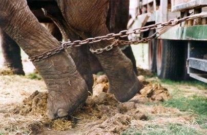 Gyvūnų teisių aktyvistai protestuos prieš cirką