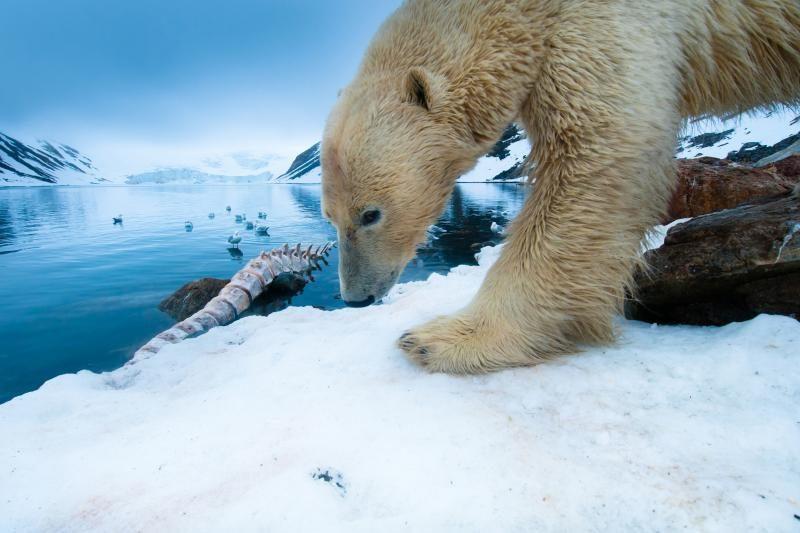 Arkties vandenyne pastebėtas į atmosferą išsiskyręs metanas