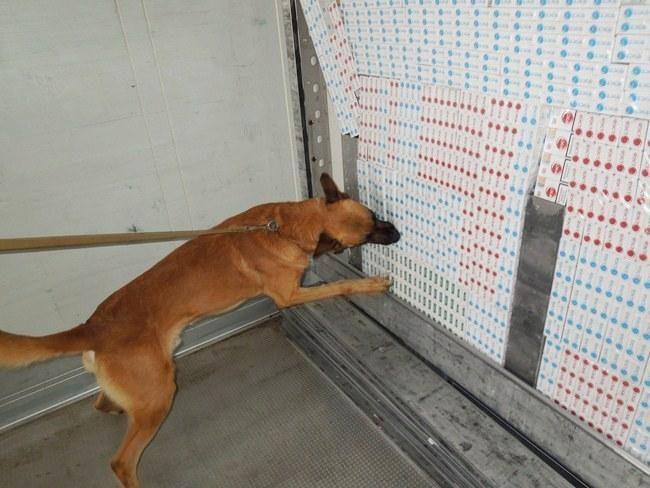 Šuo padėjo surasti tūkstančius pakelių kontrabandinių rūkalų