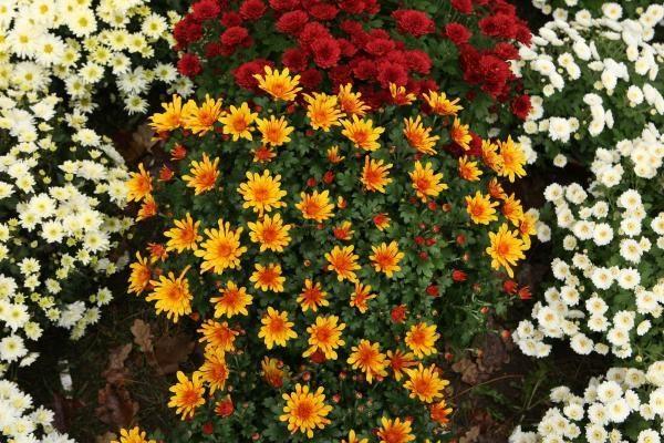 FNTT tiria Vilniaus ir Kauno gėlių prekeivių šešėlinį verslą