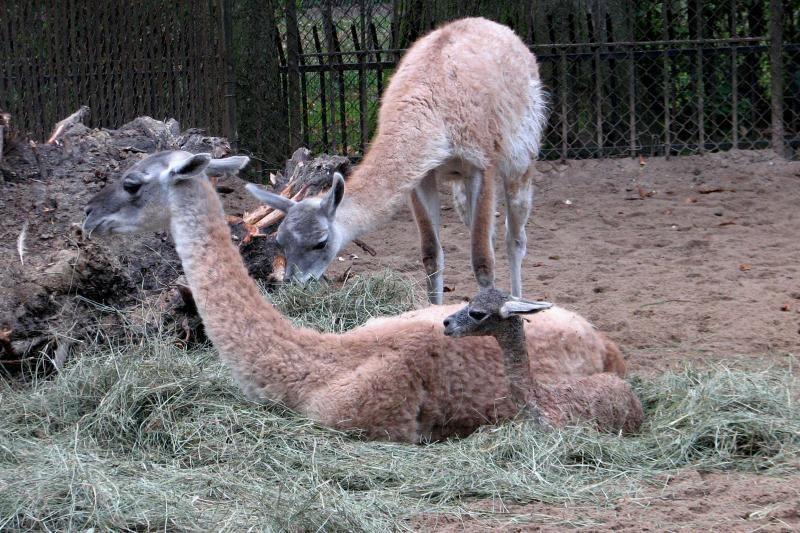 Zoologijos sode gimė rudens simbolis – Šermukšnėlė