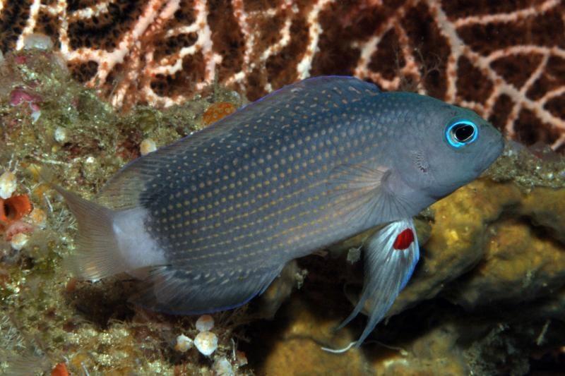 Baltijos jūroje rasta galimai seniausia pasaulyje žuvų gaudyklė