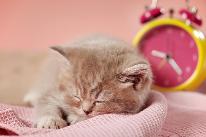 Gyvas žadintuvas: katinas kasryt žadina šeimininką durų laikikliu