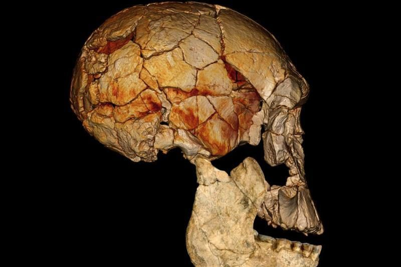 Paleoantropologai atrado dar dvi išnykusias žmonijos rūšis