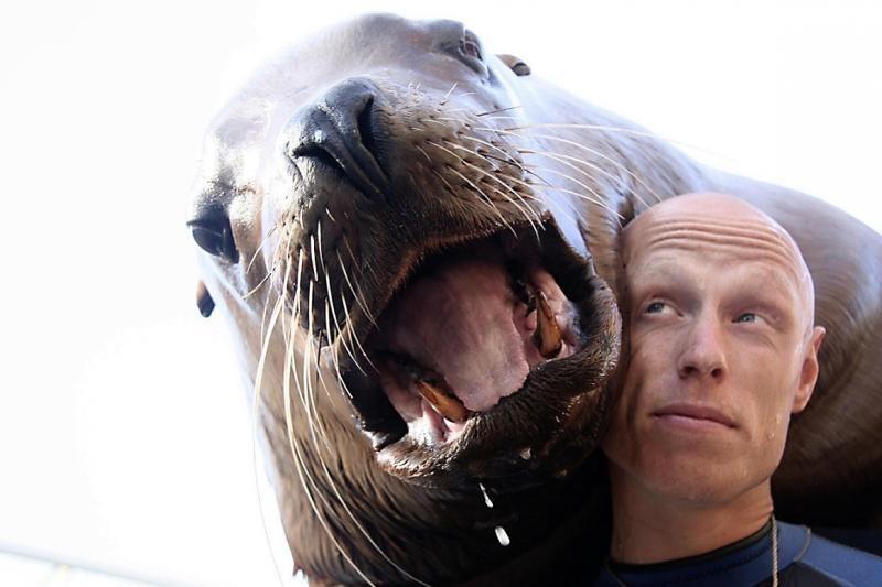 Kas nutinka, kai žmogų užpuola gigantiškas jūrų liūtas? (foto)