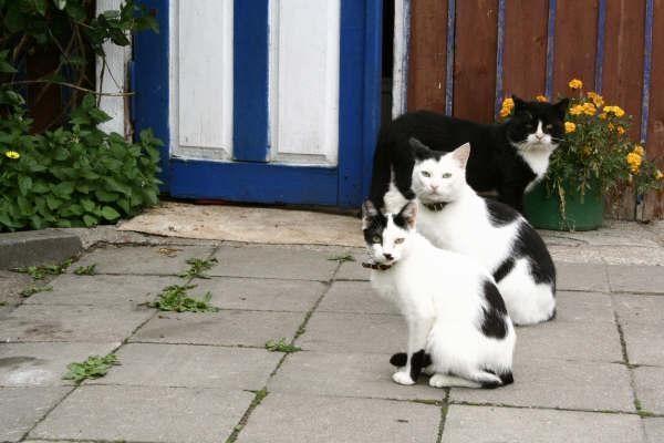Vilnietis katinus gaudė panaudodamas net 10 kilpų