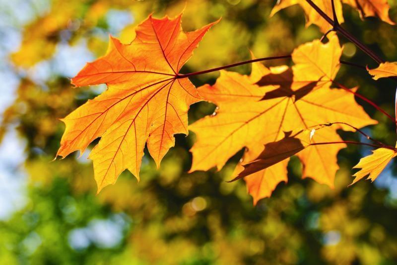 Savaitė bus rudeniškai šilta ir saulėta