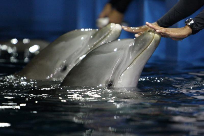 Išbandymas ekstrasensams – palaužti delfinų valią