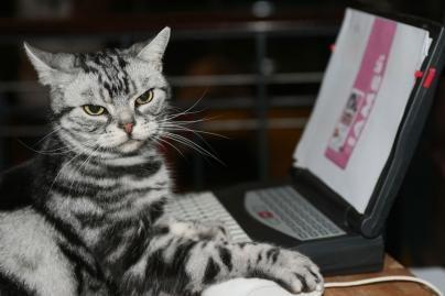 Kompiuterio pelė matuoja širdies ritmą
