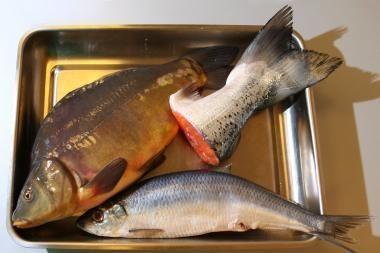 Ėmėsi tirti šešėlinę prekybą žuvimi