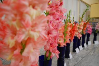 Naujos gėlių veislės subūrė ir politikus