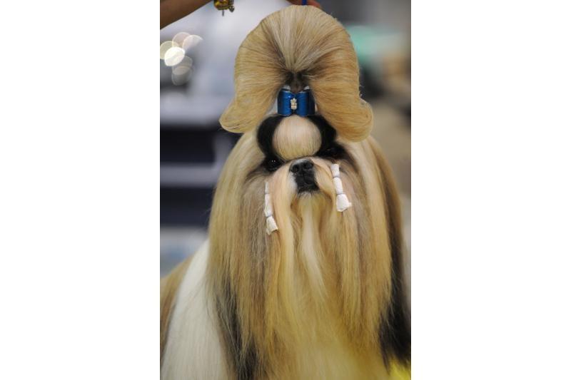 Šunų parodoje augintiniai stebina ir aristokratiškomis šukuosenomis