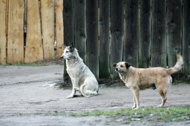 Už stovėjimą netinkamoje vietoje skyrė baudą šuniui