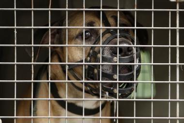 Agresyvus šuo apkandžiojo penkis kauniečius (papildyta)