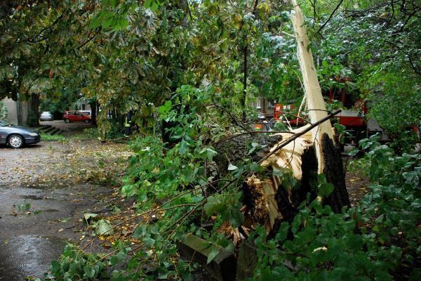 Danės gatvėje vėjas išvertė medį