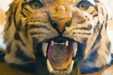 Zoologijos sode baltasis tigras sudraskė prižiūrėtoją