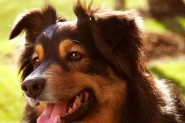Vagis išprievartavo namo šeimininkų šunį