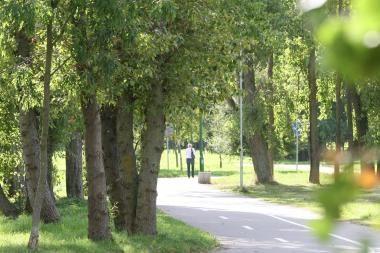 Tvarkys Draugystės parką
