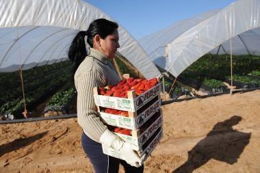 """""""Agrowill Group"""" siūlo griežtinti bausmes už nelegalų darbą"""