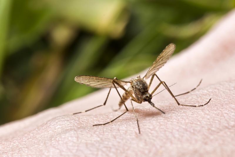 Kaunietis po kelionės į Afriką susirgo maliarija